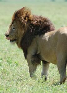Ngorongoro_Crater,_Tanzania_(2288742082)