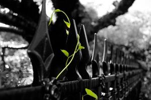leaves-84664_1920