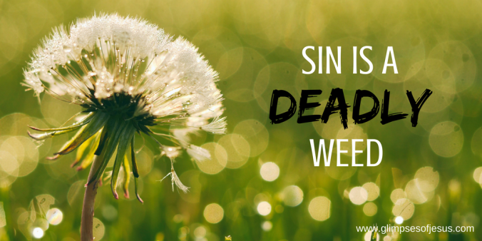 Sin is a Deadly Weed
