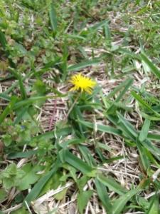 Weeds 3