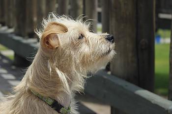 Malinda Dog